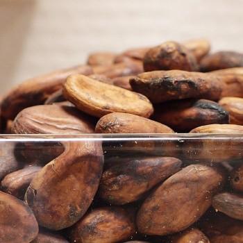 Какао-бобы сырые сорт Форастеро, Гана, 1 кг.